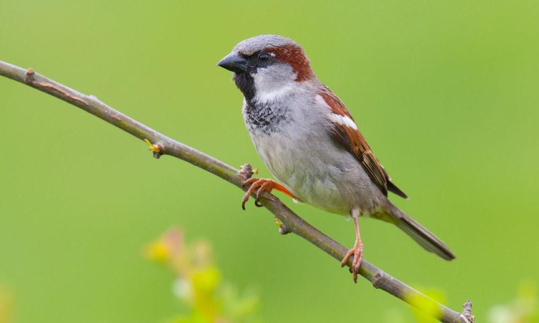 Aanvullend flora en fauna onderzoek naar vleermuizen, gierzwaluwen en huismussen
