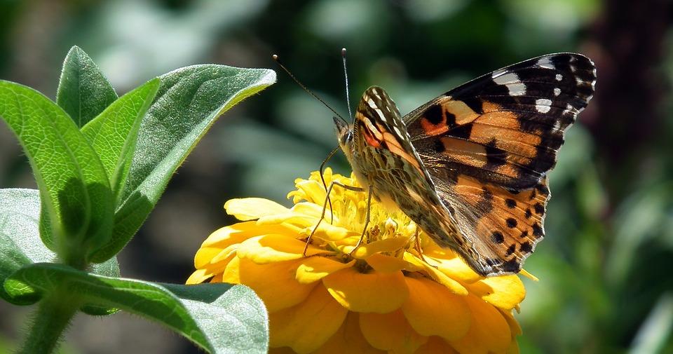 Flora en fauna onderzoek